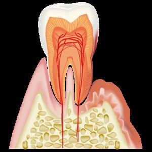 歯の健康は体の健康?予防方法と歯の健康を保つコツ