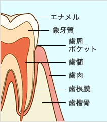 歯がぐらぐらする。どうしたら良いか?